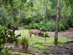 1608 Disney's Animal Kingdom43 (nooccar) Tags: 1806 animalkingdom devonadams devoncadams devonchristopheradams disney disneyworld disneysanimalkingdom june june2018 devoncadamscom devoncadamsgmailcom