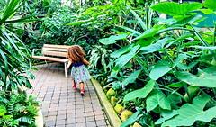 A free spirit: HBM! (+1) (peggyhr) Tags: peggyhr bench girl running vegetation lush green muttartconservatory img4452c edmonton alberta canada super~sixbronze☆stage1☆ level1peaceawards heartawards super~six☆stage2☆silver
