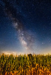 Celestial Beauty in a Tennessee Cornfield (jamespoundiv) Tags: stars milky way milkyway night sky corn cornfield astrophotography longexposure long exposure tripod planets galaxy galaxies universe blue tennessee country rural farm shootingstar meteor asteroid