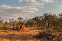 Parc Kruger Afrique du Sud (mille_emmanuel) Tags: nature afriquedusud canon paysage landscape arbre tree nuage
