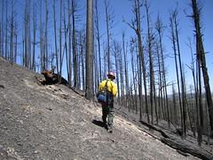 Eagle Rock BAER 2010 (Kaibab National Forest) Tags: kaibabnationalforest williamsrangerdistrict baer burnedareaemergencyresponse forest forestservice restoration forestrestoration landscape trees