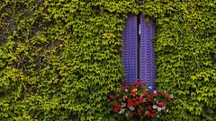 Fermons les volets... (Fred&rique) Tags: lumixfz1000 hdr photoshop raw végétation architecture volets lierre fleurs géraniums maison village hattonchâtel meuse