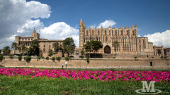 Cathedral Palma de Mallorca (Mr. Oliver976) Tags: cathedral kathedrale kirche gebäude building mallorca palmademallorca sightseeing reise unterwegs journey travel city town hauptstadt old wiese meadow blumen flower summer canon 6d weitwinkel cityscape island insel holiday urlaub church
