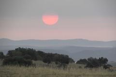 the beauty of an alentejo morning (lualba) Tags: sunrise sun sonne sonnenaufgang alentejo landschaft landscape nature natur hills hügel morgen morning