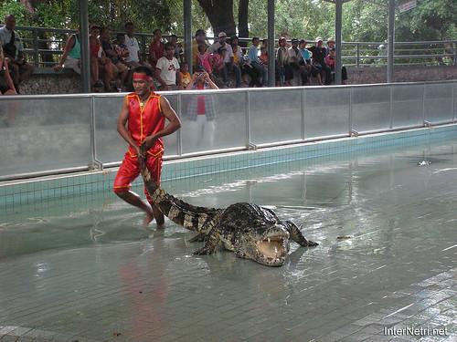 В пащу крокодилу Паттайя Таїланд Thailand InterNetri 11