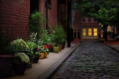 Evening Illuminations (E.M.Thomas) Tags: plants light buildings street cobblestone oldcity nikon85mmf14d philadelphia