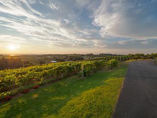 Sun Setting over Vineyards