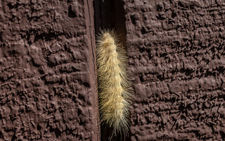 Caterpillar on a mission