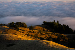 (kayters) Tags: kaytedolmatchphotography kathleendolmatch mttamalpias mttam westcoast ca canon california northerncalifornia millvalley marinheadlands sunset july summer coastal explore fog trees mountains