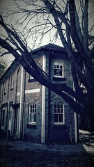 (mblaeck) Tags: spooky scary old cold deadtree building sutherland sutherlandshire