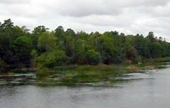 Riverside (Ken-Zan) Tags: riverside ätran kenzan ljunghav trees träd grönska