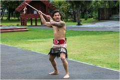 A Traditional Maori greeter. (John Cosnett) Tags: tatoos spear