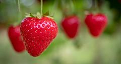 Summer Strawberries. (dgjeffery1969) Tags: strawberry strawberries red green summer fruit