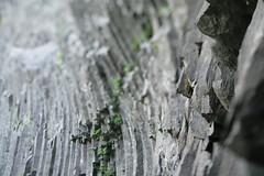 Latourell Falls (Tony Pulokas) Tags: latourellfalls columbiagorge columbiarivergorge summer oregon blur rock basalt columnarbasalt tilt bokeh fern maidenhairfern