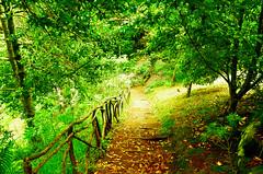 Bazterretatik (Erre Taele) Tags: magic madeira portugal island isla senderismo sendero road trip bideak nature