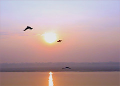 'Purple Haze' (Mary Faith.) Tags: sunrise india ganges tmi river holy