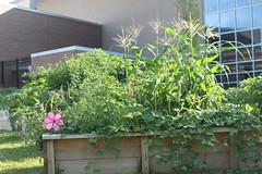 IMG_7931 (giddyup2002) Tags: grantsviewcommunitygarden grantsviewgarden communitygarden garden stlouis