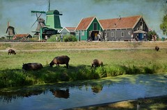 Zaanse Schans (Aránzazu Vel) Tags: rural zaanseschans windmill amsterdam holland netherlands landscape paisaje paesaggio countryside campo campagna nature naturaleza molinos mulini textura texture