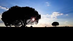 Pine tree (renelacher) Tags: spain spanien españa katalonien catalonia cataluña baum sky himmel cielo silhouette clouds nubes wolken árbol mediterranean empúries costabrava sun sol sonne pine tree