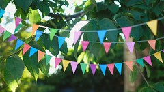bunting on a summers day... (CatMacBride) Tags: bunting video