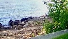 Rocky beach! (Maenette1) Tags: rocks beach tree water menominee uppermichigan flicker365 allthingsmichigan absolutemichigan projectmichigan