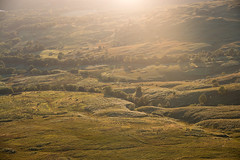 Evening (Raphs) Tags: scotland arrochybeg stirling evening backlight softlight shadow meadow pasture landscape scenic grassland woodland hilly raphs canoneos70d canonefs1585mmf3556isusm lochlommondthetrossachesnationalpark