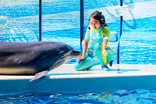 Go for it! At the Dolphins and Sea Lions Show of Enoshima Aquarium, Fujisawa : イルカとアシカのショー(新江ノ島水族館)