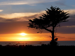 (An Arzhig) Tags: arbre tree roscoff finistère bretagne france panasonic lumix gx800