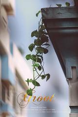 Groot (Tuhin Ibrahim) Tags: tree plant buildings