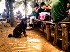 Hon May Rut, Phu Quoc, Vietnam (Kevin R Thornton) Tags: phuquoc galaxys8 asia travel people mobile samsung dog vietnam honmayrut animal thànhphốphúquốc tỉnhkiêngiang vn