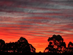Winter sunset series II 5/9 (elphweb) Tags: hdr highdynamicrange sunset nsw australia sky skies clouds cloudy trees silhouette silhouettes sun red rose blue orange colourful colorful colour color brilliant bright