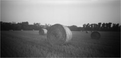 About August / O Sierpniu (Piotr Skiba) Tags: pinhole field summer film noon bw monochrome siemianowice śląskie poland pl piotrskiba landscape fomapan400 harvest