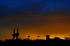 The Edge of Darkness (oybay©) Tags: monsoon2018 color colors colorfu orange sky sunset monsoon silhouette arizona cloudy clouds saguaro cactus nature natural yellow red purple
