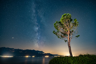L'arbre et les étoiles  |  The tree and the stars