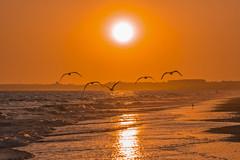 El ojo invisible (Ignacio M. Jiménez) Tags: playa beach mar sea agua water atardecer sunset gaviotas seagull seascape paisaje ignaciomjiménez puntaumbria huelva andalucia andalusia españa spain