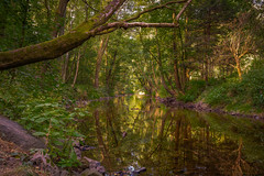 River Reflection (ralfkai41) Tags: landscape landschaft woods reflection röder waterreflection wald natur flus mirroring woodlands river forest nature spiegelung bäume trees reflektion water wasserspiegelung wasser