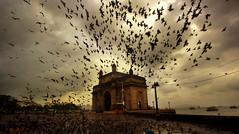 Gateway at dawn ! (Debmalya Mukherjee) Tags: debmalyamukherjee canon550d 1018mm gatewayofindia mumbai colaba cloudscape pigeons monsoon morning dawn