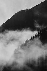 Fjord Fog