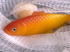IL PESCE ROSSO. (FRANCO600D) Tags: mesh macro hmm macromondays macromondaysthememesh rete trama pesce pescerosso pesciolino canon eos6dmarkii franco600d