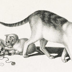 Illustration of domestic cat and three playful kittens by Gottfried Mind (1768-1814). Original from Library of Congress. Digitally enhanced by rawpixel. thumbnail
