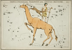 Sidney Hall's (1831) astronomical chart illustration of the Camelopardalis, Tarandus and the Custos Messium. Original from Library of Congress. Digitally enhanced by rawpixel. (Free Public Domain Illustrations by rawpixel) Tags: aerostatique antique art arts astrological astronomy book camel camelopardalis celestial chart constellations custos drawing etchings hall handcolored illustrated illustration locimage magical map messium mythological name old paints reindeer shepherd sidney sidneyhall sketch stars tarandus vintage zodiac