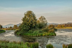 Wildlife Island at Willbrand Park-1 (Carol J Jackson Photography) Tags: willbrandcreekpark water parks beautifulbc abbotsford