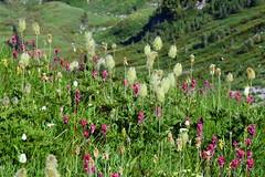 Wildflowers 2 (jimculp@live.com / ProRallyPix) Tags: mountrainiernationalpark washington nps mountain