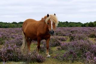 Pony and Heather