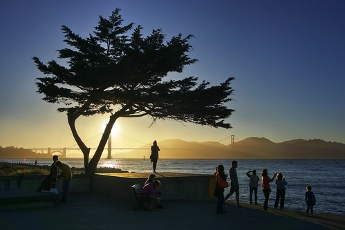 Lonely tree at Crissy Field