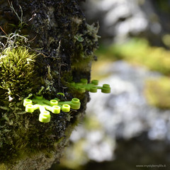 LEGO Green 04 (PatrickBaroni MYSTYLE-MYLIFE) Tags: lego legogreen green madefromplants