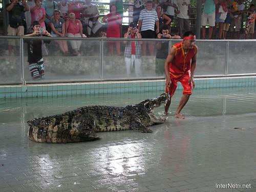 В пащу крокодилу Паттайя Таїланд Thailand InterNetri 25