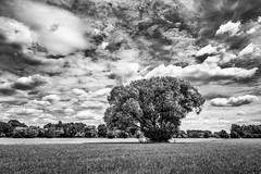 Lonesome Tree (drasphotography) Tags: tree baum albero sky himmel cielo clouds nuvole wolken monochrome monochromatic monotone nature natur natura drasphotography nikon d810 nikkor2470mmf28 nürnberg2018 peaceful blackandwhite bw schwarzweis sw bianconero bn landscape landschaft