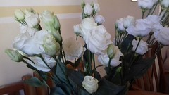 Today's flowers on the kitchen table (madlily58) Tags: white flowers whiteflowers lisianthus