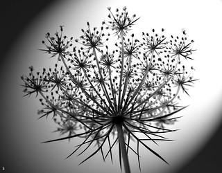 _DSC0633 -Fleur